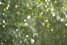 Free Rain Illuminated By A Sunlight Stock Images - 3214224