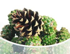 Pine Cones In Glass Bowl Royalty Free Stock Image