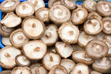Free Mushrooms Stock Photography - 3214912