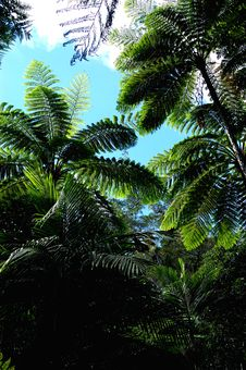 Free Forest Of Ferns Royalty Free Stock Photo - 3215185