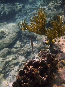Free Coral Reef Formation Royalty Free Stock Photos - 3215188