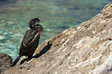 Free Cormorant Stock Photo - 3215780