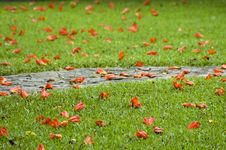 Free Spring Path - DOF Stock Photo - 3216050