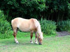 Free Horse Stock Image - 3216971