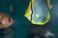 Free Fish Stock Photo - 3217710