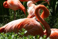 Free FabuluS Flamingo Stock Image - 3219911