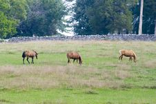 Free Three Horses - Wide Shot Royalty Free Stock Image - 3219996