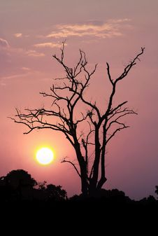 Leafless Trees On Sunset Stock Photos