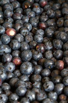 Free Fresh Blueberries Stock Image - 32110031