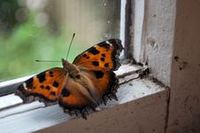 Free Butterfly Stock Photos - 32111403