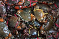 Free Fresh Live Crabs On The Market In India Royalty Free Stock Photos - 32115808