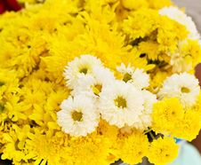 Free Yellow Flower Royalty Free Stock Photography - 32118897