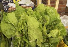 Free Fresh Lettuce Royalty Free Stock Photo - 32128735