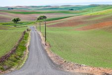 Free Palouse Country Road Royalty Free Stock Image - 32135466
