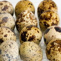Free Egg Femail Quail Royalty Free Stock Photography - 32157487