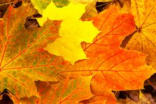 Free Leaves Background  Autumn Stock Photography - 32157462