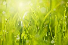 Free Fresh Grass With Dew Drops Stock Photo - 32159650