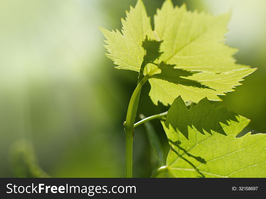 Grape Leaves Background Free Stock Images Photos 32158697 Stockfreeimages Com