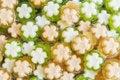 Free Jelly Flower Shape Royalty Free Stock Photos - 32163348