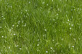 Free Green Grass With Fallen Petals Stock Images - 32164814