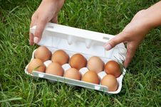 Free Pack Of Eggs On Grass Royalty Free Stock Photos - 32175858