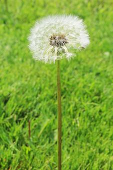 Free Dandelion Fluff Royalty Free Stock Images - 32178229
