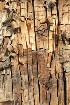 Free Bark Stock Photography - 32179762