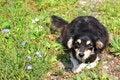 Free Puppy Stock Image - 32180231