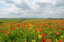 Free Field Of Remembrance Royalty Free Stock Photos - 32181098