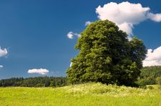 Free Tree On Meadow Royalty Free Stock Photos - 32185898