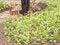 Free Gardener Planting Spring Plants Stock Photo - 32183760