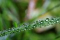 Free Droplets Stock Photo - 32190480