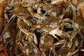 Free Crabs Stock Photo - 3224260