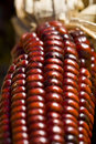 Free Indian Corn Stock Image - 3227701