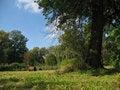 Free Hay Bale Royalty Free Stock Photos - 3228508