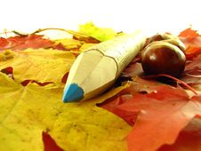 Free Chestnuts And Color Pencil Royalty Free Stock Photo - 3220425