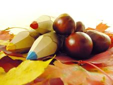 Free Chestnuts And Color Pencils Stock Photo - 3220440