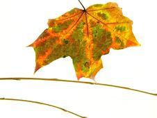 Free Autumn Leaf Stock Photos - 3220463
