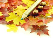Free Chestnuts And Color Pencil Stock Photo - 3220470