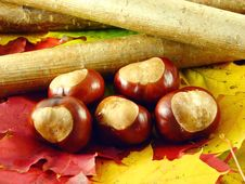 Free Chestnuts And Branch Stock Photos - 3220513