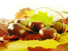 Free Chestnuts On Autumn Leaves Stock Photography - 3220532