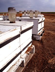Free Beehives Stock Photos - 3221643