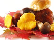 Mushrooms On Color Leaves Stock Photo