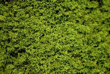 Free Green Moss Stock Photography - 3222112
