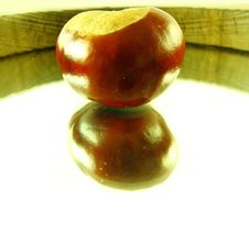 Free Chestnut On Mirror Royalty Free Stock Images - 3222189