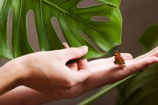 Free Butterfly In Hands Royalty Free Stock Photo - 3222295