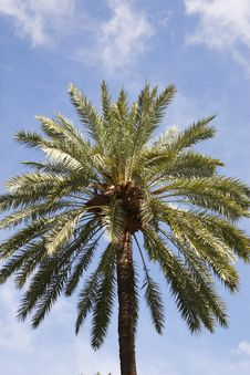 Top Of A Single Palm Tree Stock Photos