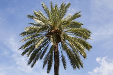 Free Top Of A Single Palm Tree Stock Photo - 3222530