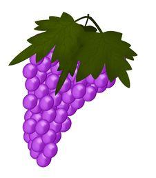 Free Purple Grapes Stock Image - 3223021