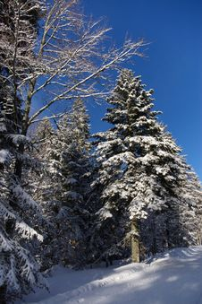 Free Winter Snowy Forest Stock Photo - 3223370